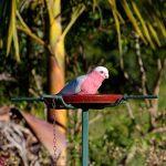 Bellinger Valley Birds