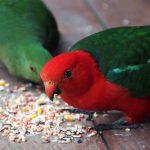 Bellingen Birdlife